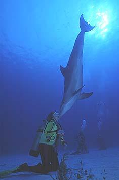 sterben delphine aus